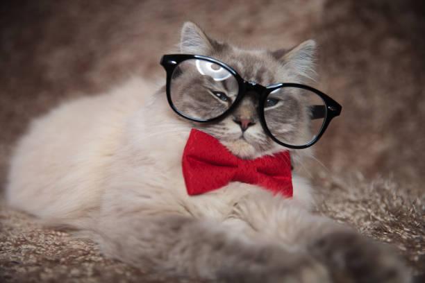Elegant adorable cat is wearing glasses and red bowtie picture id921720926?b=1&k=6&m=921720926&s=612x612&w=0&h=wtf7rdv xpaoeaehemdkqypqepwnnlmqnf5shpo2hto=