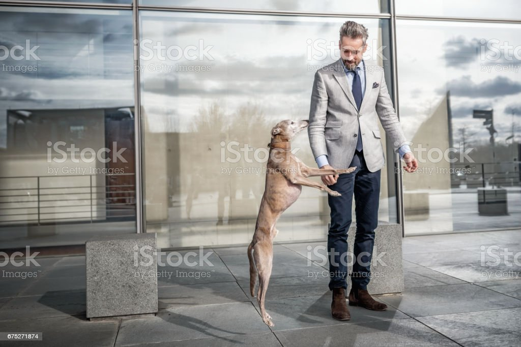 elegant bearded businessman playing with dog in front of modern office building stock photo