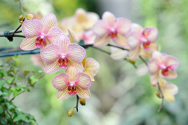 Elegant Blooming Orchids