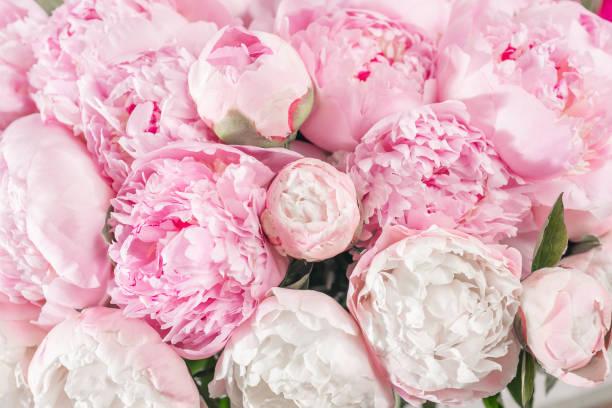 Elegant bouquet of a lot of peonies of pink color close up beautiful picture id904980112?b=1&k=6&m=904980112&s=612x612&w=0&h=gx6dikld8zub0zz mvosbl72r65qmxh6ei6djpqbjt0=