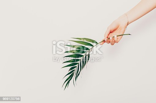 istock Elegant composition of female hand holding palm leaf 959120756