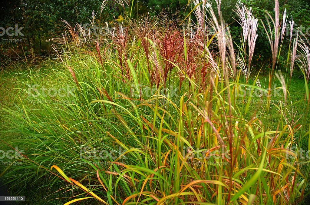 Elegant flower bed of grass stock photo