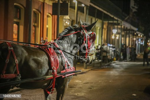Elegant Horse Pulling Carriage, French Quarter New Orleans, Night