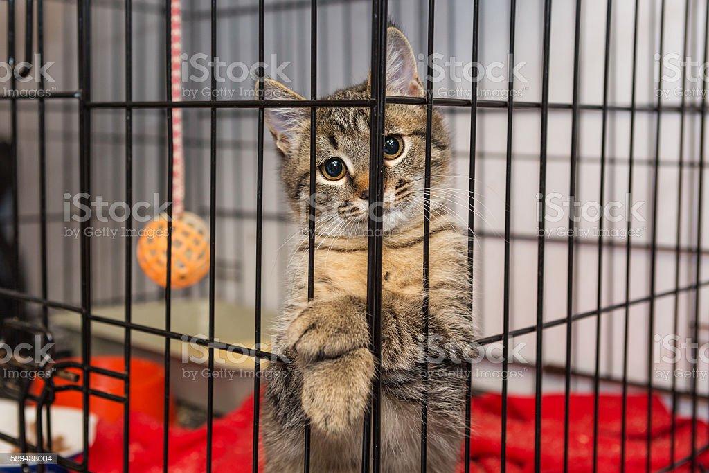 Elegant kitten at the shelter stock photo
