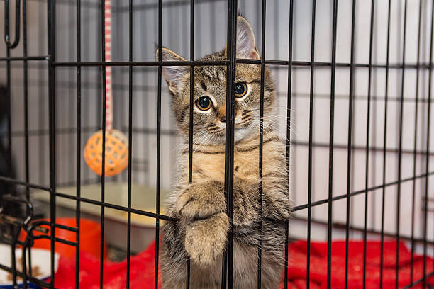 Elegant kitten at the shelter Little kitten in the shelter, elegantly posing in a cage sheltering stock pictures, royalty-free photos & images