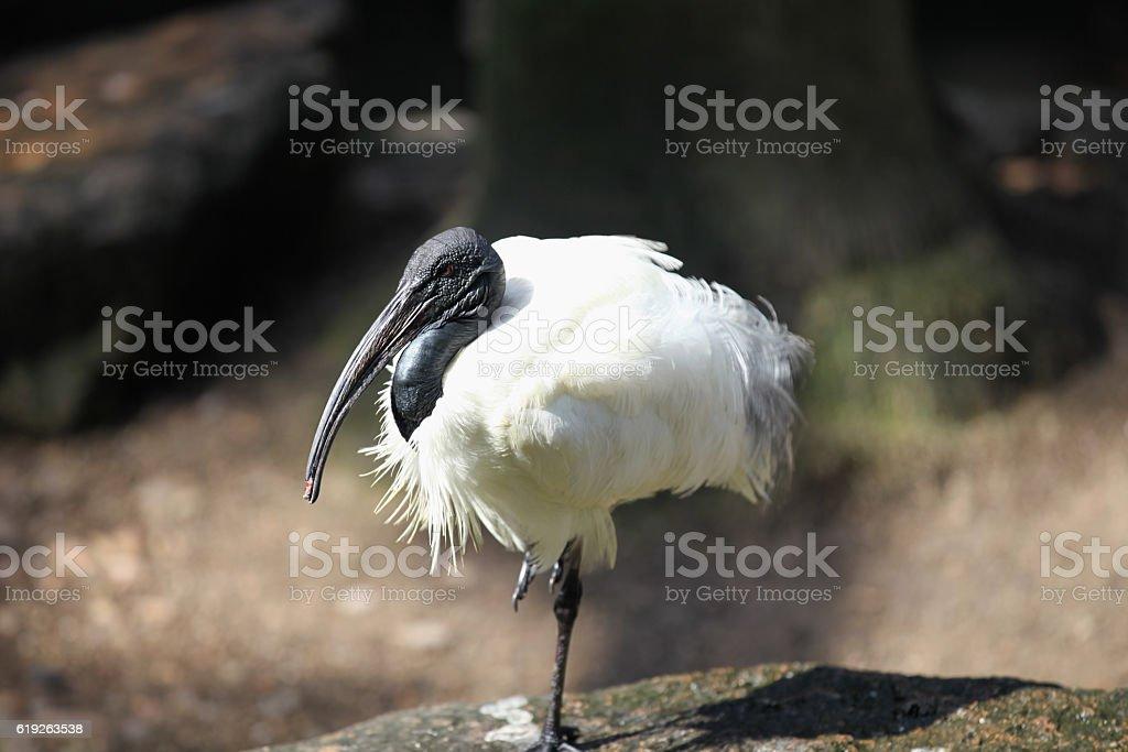 Elegant long-legged bird heron, Thailand stock photo