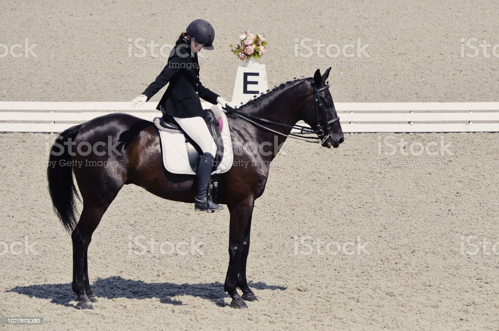 Elegant Rider Woman And Black Horse Stock Photo Download Image Now Istock