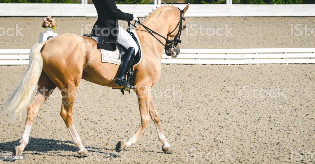 Elegante Reiter Frau Und Cremello Oder Perle Pferd Stockfoto