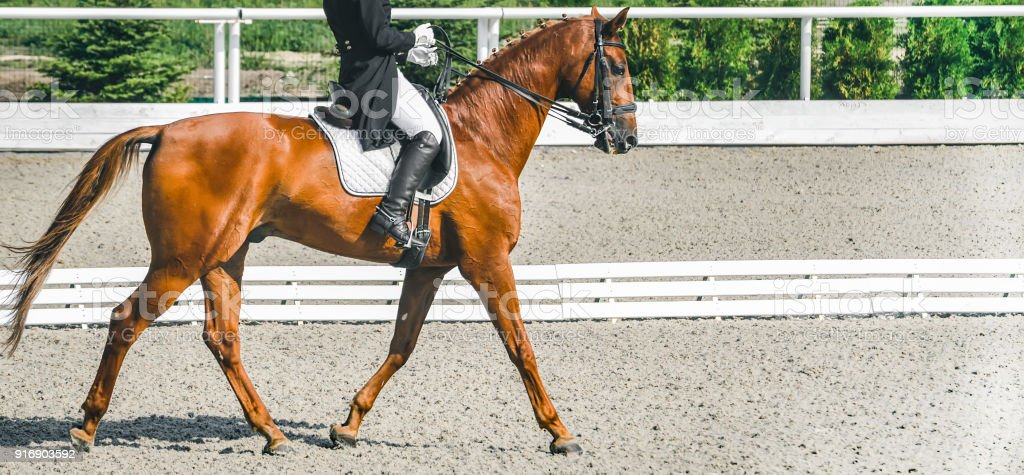 Elegant rider woman and sorrel horse. Beautiful girl at advanced dressage test on equestrian competition. stock photo