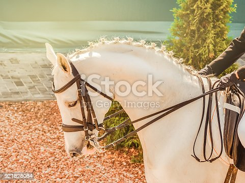 istock Elegant rider woman and white horse. Beautiful girl at advanced dressage test on equestrian competition. 921828084