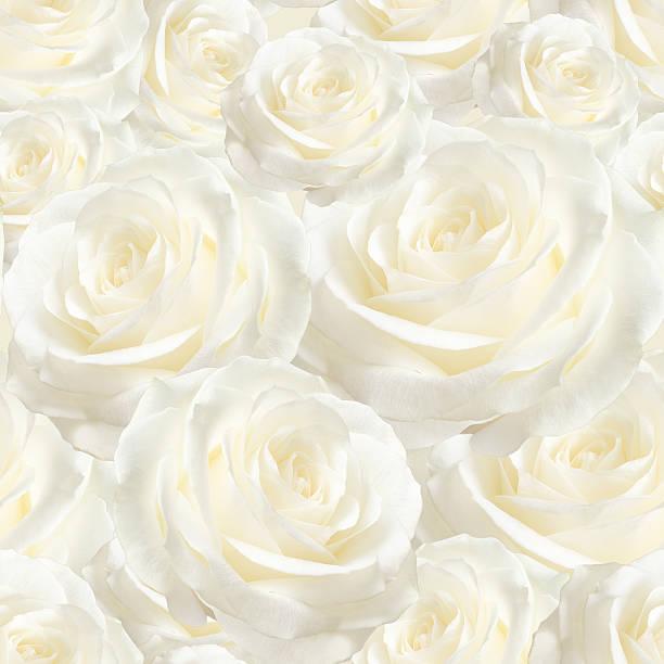 Elegant white seamless pattern luxurious rose picture id511588424?b=1&k=6&m=511588424&s=612x612&w=0&h=hgqzxckywlf5iw7jh45 hg4q3whfcdc7djqpib9er8s=