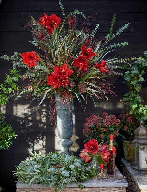 hiver élégant et fleurs de noël - amaryllis photos et images de collection