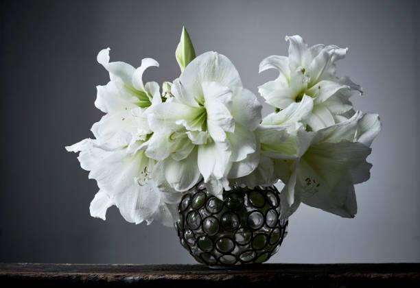 fleurs d'hiver élégant dans un vase en verre rond - amaryllis photos et images de collection