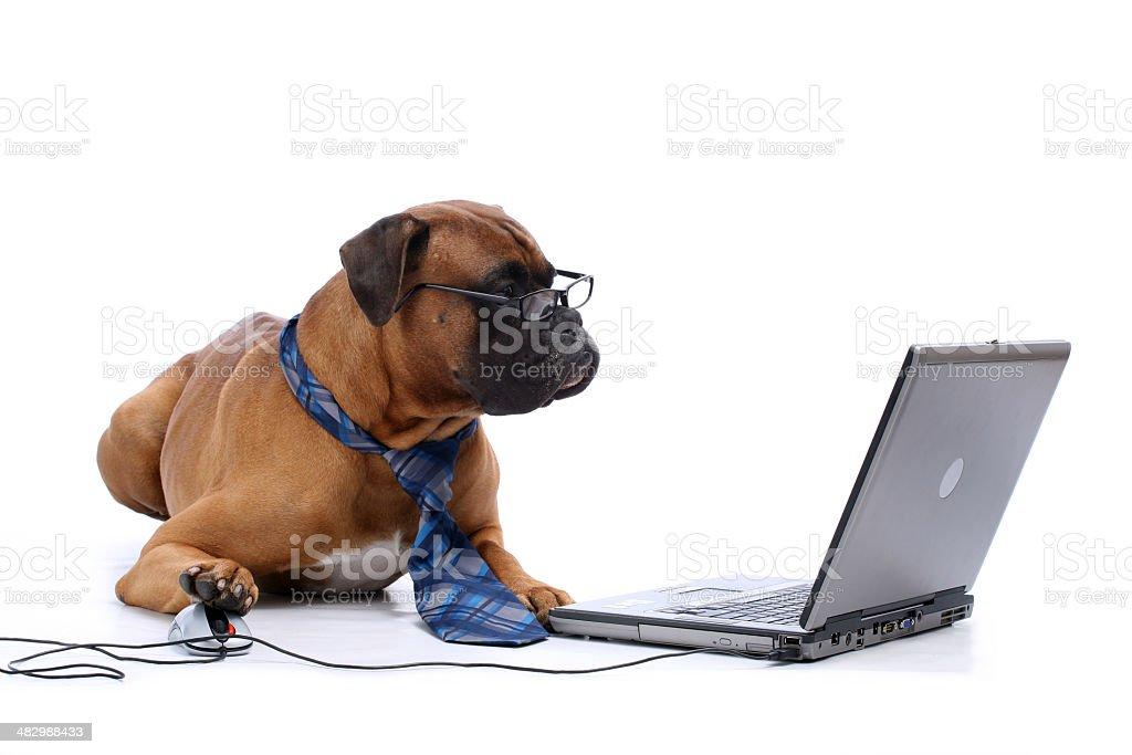 Elegant  working on laptop royalty-free stock photo