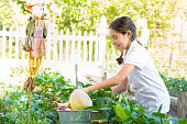 Hispanic or Caucasian little girl is picking vegetables from large garden during a school field trip at a local farm. Girl is wearing a private school uniform and is kneeling in dirt near a scarecrow. Student is wearing a private school children.