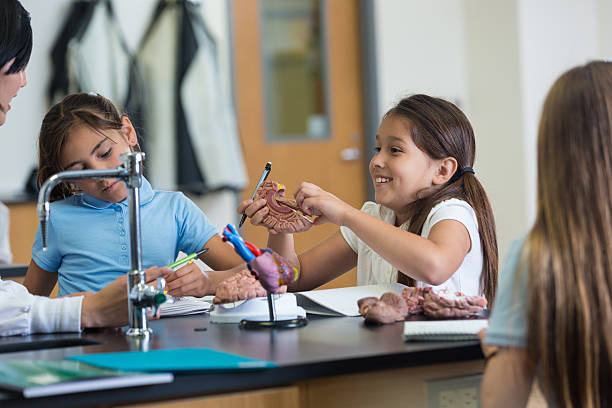 Estudiantes escuela primaria Modelo de cerebro estudiando en clase de Ciencias de juguete - foto de stock