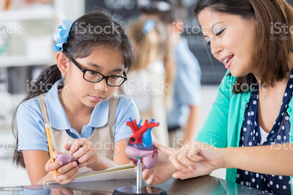 Happy female elementary school teacher explains to a female student...