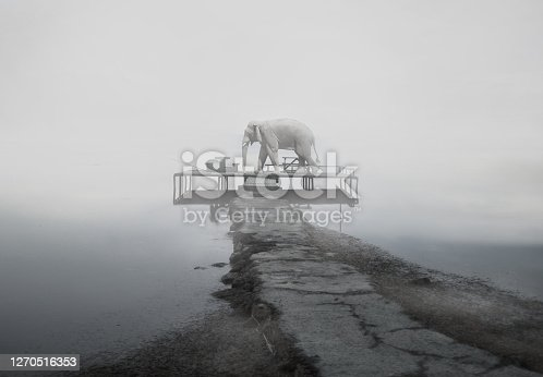 Elephand on scaffolding with fog