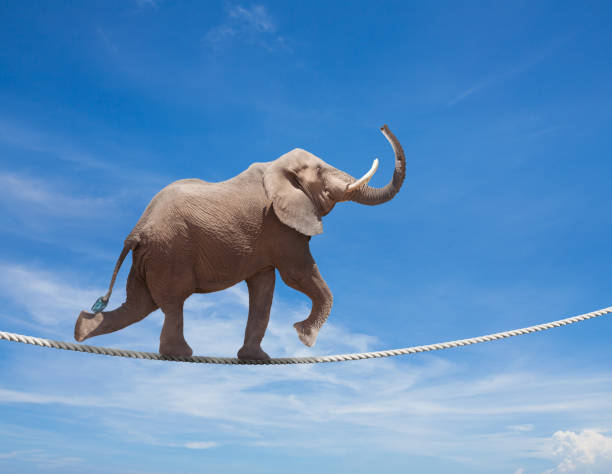 Elephant acrobat walking on the wire cord stock photo