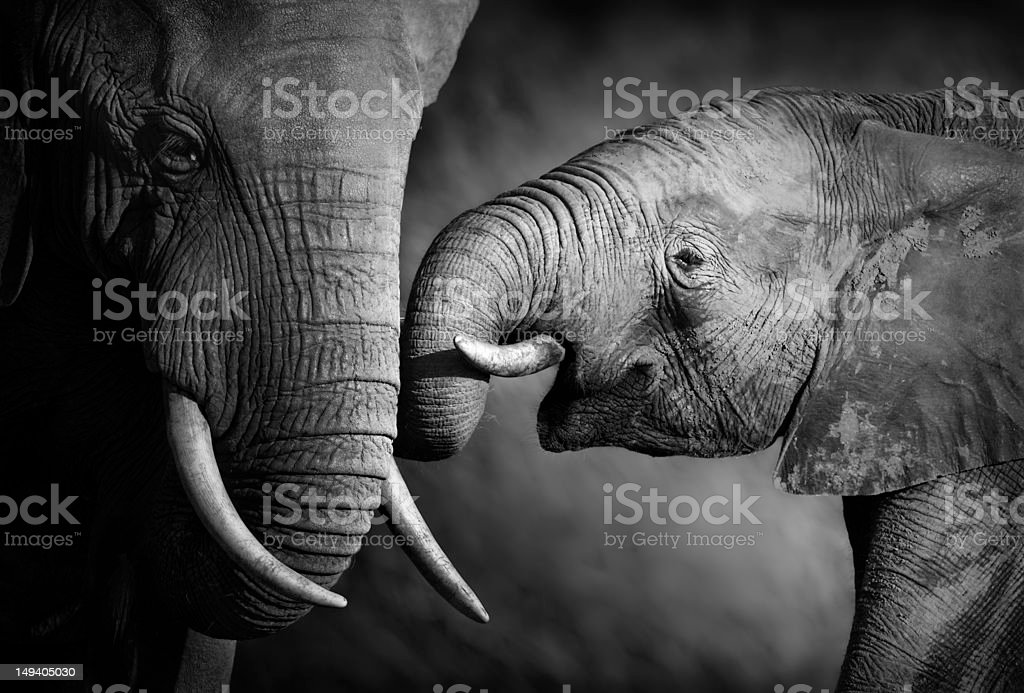 Elephant affection (Artistic processing) stock photo