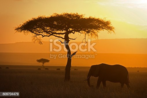 Lone elephant grazing in the savannah at sunset - Masai Mara, Kenya
