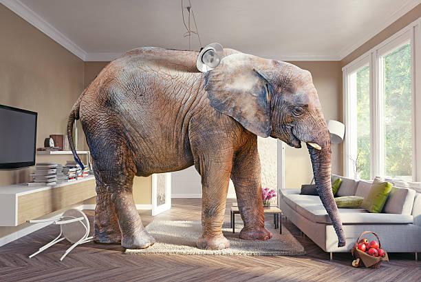 elephant and  apples - raumideen stock-fotos und bilder
