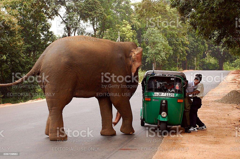 Elephant and Auto Rickshaw stock photo