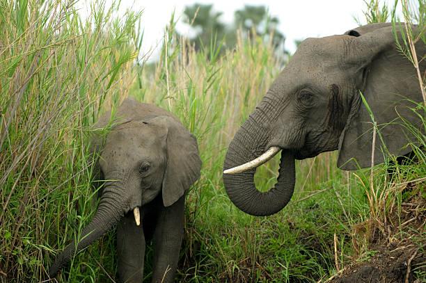 Elephant and baby stock photo