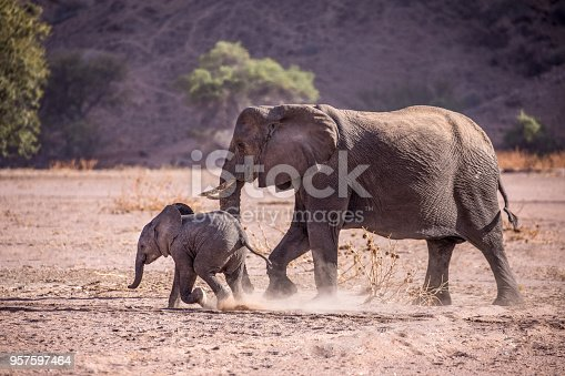 1137909085 istock photo Elephant and calf 957597464