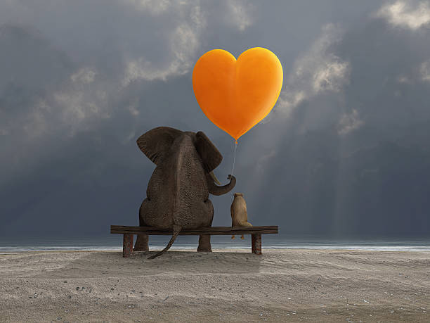 elephant and dog holding a heart shaped balloon elephant and dog holding a heart shaped balloon animal valentine stock pictures, royalty-free photos & images