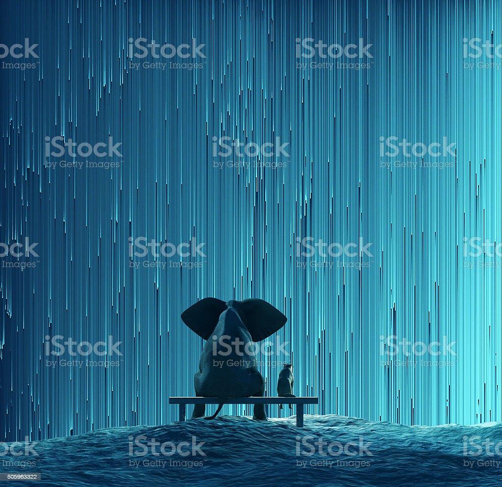 elephant and dog looking at star Rain stock photo