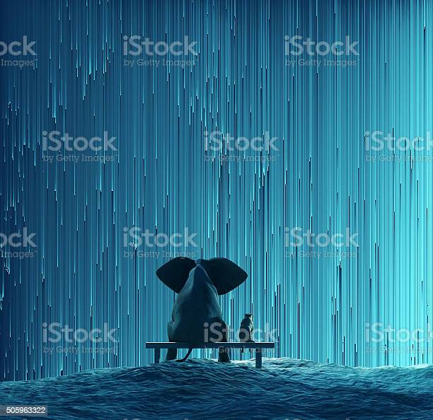 Photo of elephant and dog looking at star Rain