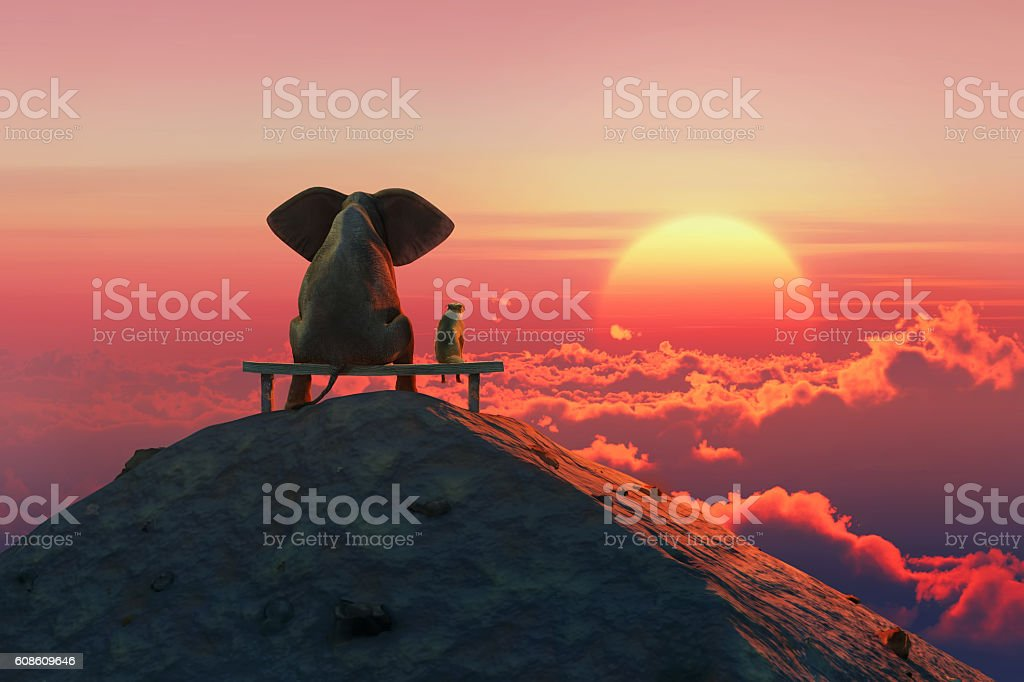Elephant and dog sit on a mountain top stock photo