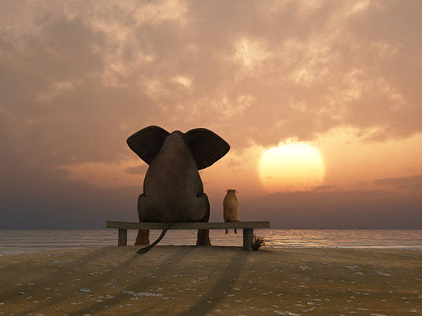 elephant and dog sit on a summer beach stock photo