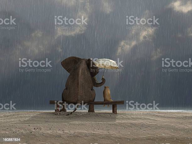 Elephant and dog sit under the rain picture id160887834?b=1&k=6&m=160887834&s=612x612&h=ztrlzqellazee80mfei4o17yck8cxwhmzpxeghh9zza=