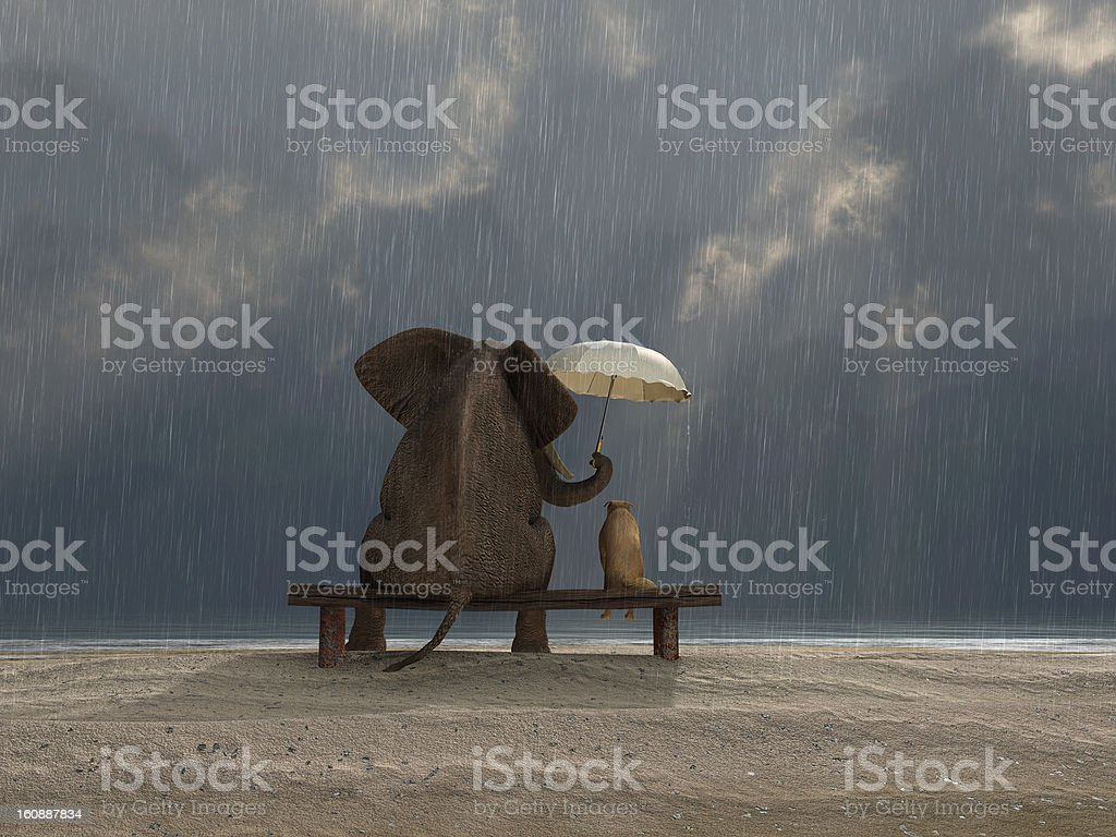 elephant and dog sit under the rain stock photo