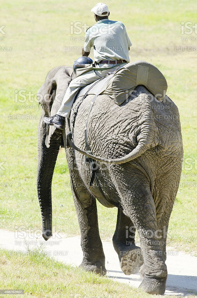 Elephant and guide royalty-free stock photo