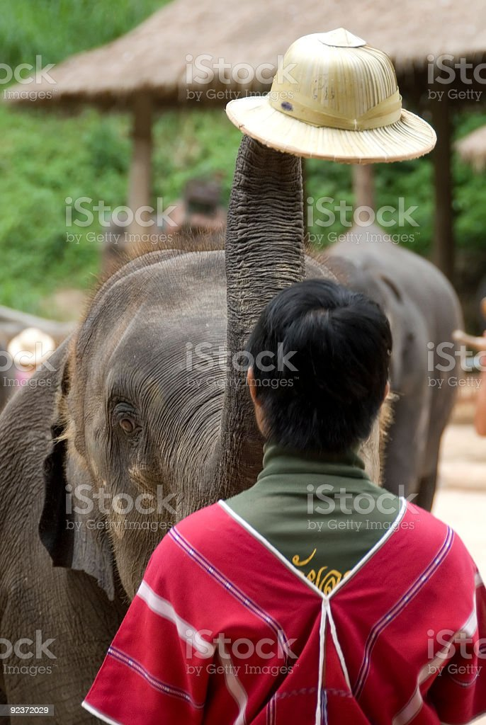 Elephant and hat 01 royalty-free stock photo