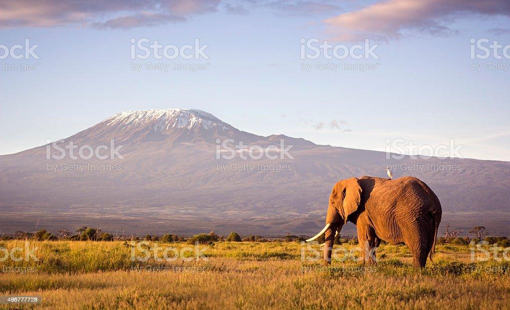 Classic safari scene of a large bull elephant against a Kilimanjaro...