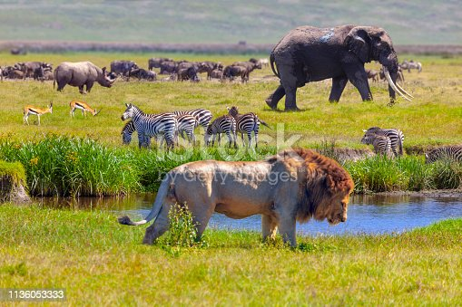 Rhino, Springboks, zebra, Elephant and lion in Serengeti National Park, Tanzania.