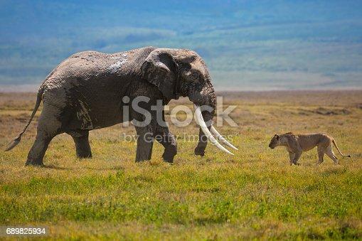 Elephant and lion in Serengeti National Park, Tanzania.