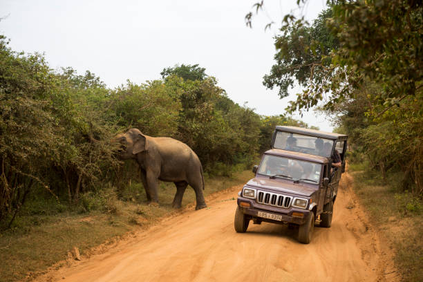 Elephant and safari at Yala National Park in Sri Lanka A safari vehicle drives past a male elephant at Yala National Park, the most visited national park in Sri Lanka. yala stock pictures, royalty-free photos & images