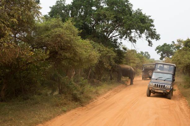 Elephant and safari at Yala National Park in Sri Lanka Safari vehicles drive past a male elephant at Yala National Park, the most visited national park in Sri Lanka. (April 12, 2017) yala stock pictures, royalty-free photos & images