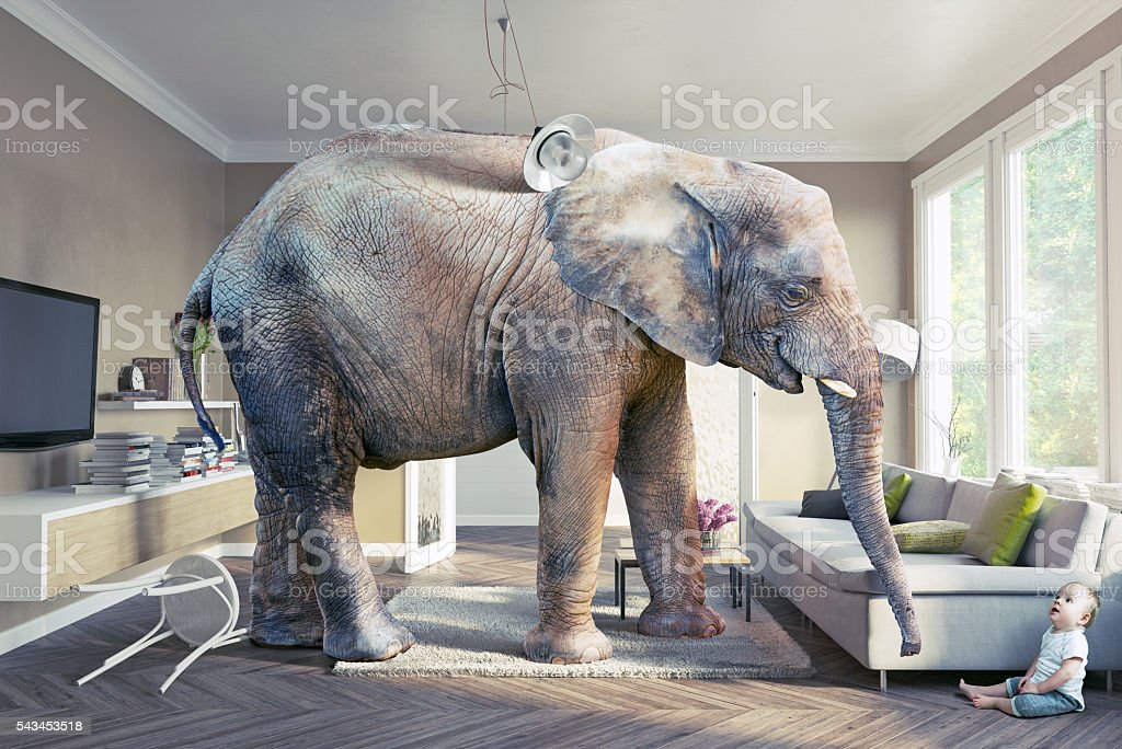 elephant and the baby stock photo