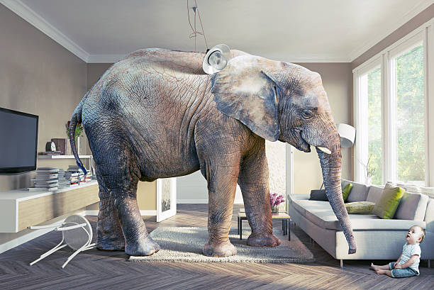 elephant and the baby Big elephant and the baby  in the living room.Photo combination concept hide and seek stock pictures, royalty-free photos & images