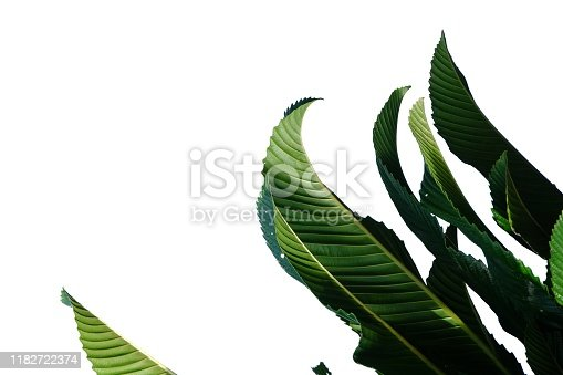 for green foliage backdrop