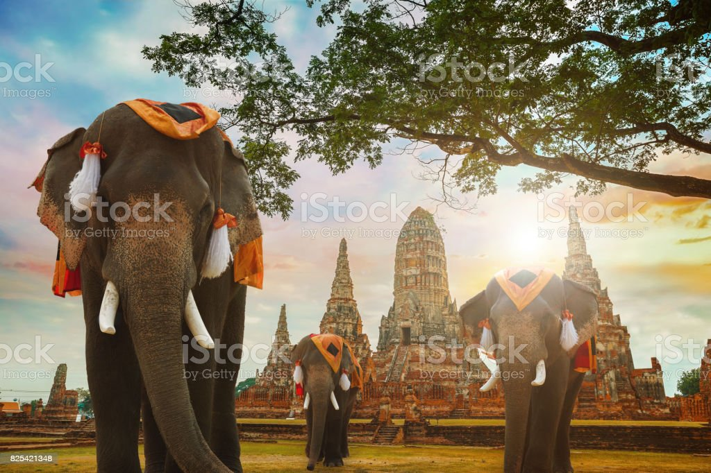 Elephant at Wat Chaiwatthanaram temple in Ayuthaya Historical Park, a UNESCO world heritage site, Thailand stock photo