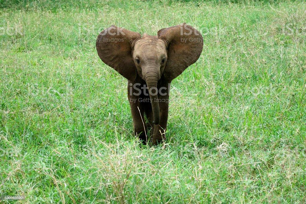 Elephant baby stock photo