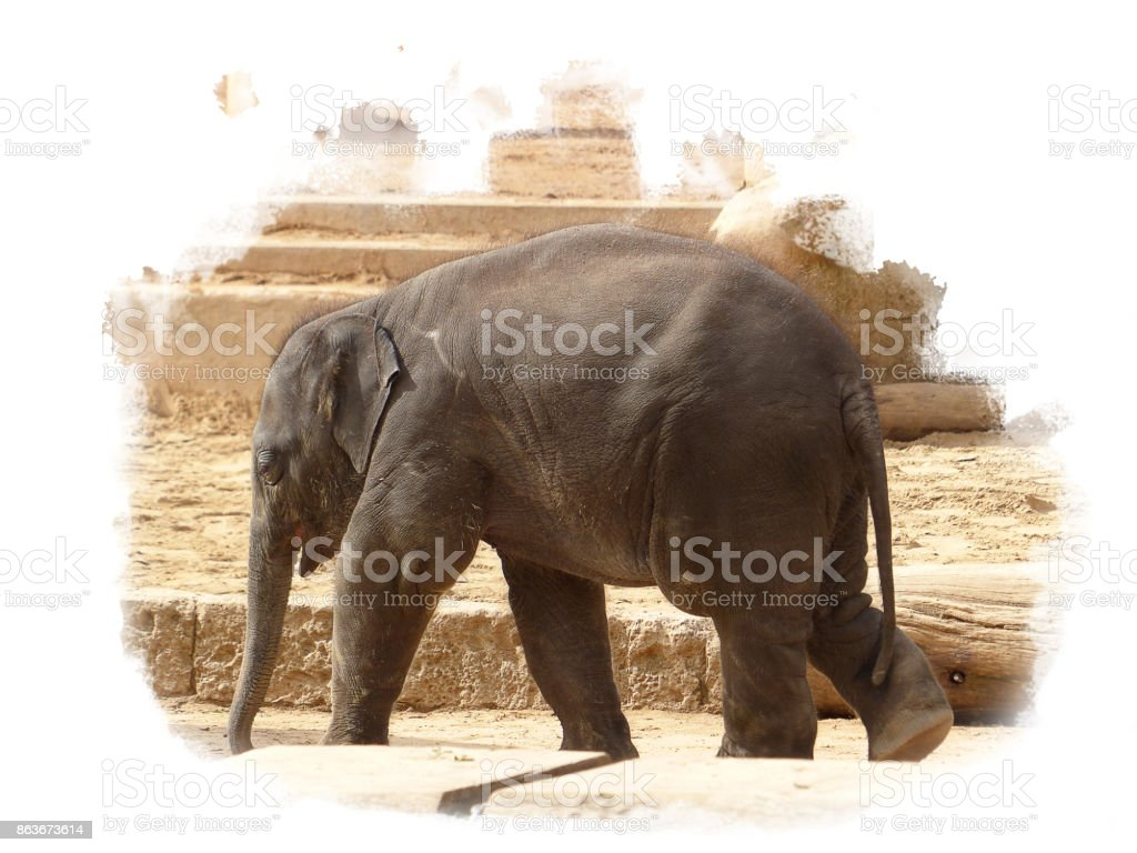 Elephant baby walking alone in the sun stock photo