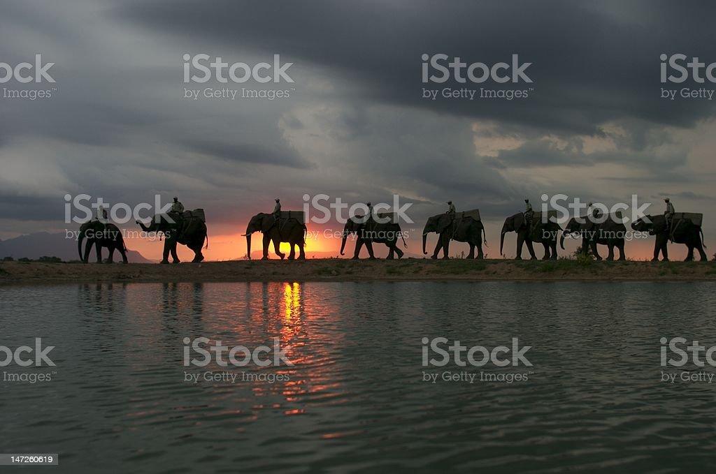 Elephant back safari stock photo
